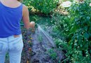 Watering a Garden With Softened Water