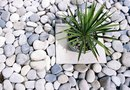 Plants That Require Little Water