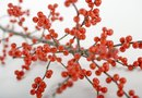 Plants to Grow With Winterberry