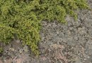 How to Keep Moss From Growing on the Driveway