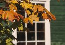 How to Transplant Maple Trees