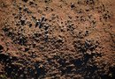 Landscape Soil Preparation