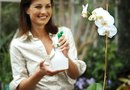 How to Water an Orchid With Distilled Water