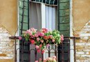 How to Plant Geraniums in Window Boxes