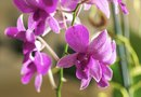 Orchids With Frost Damage