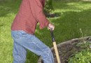 When to Replant Shrubs