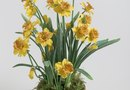 How to Plant Bulbs Inside