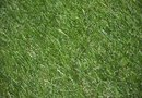 How to Remove Grass From the Backyard for Pavement