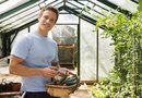 How to Raise Cucumbers in a Greenhouse