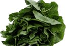 How to Grow Spinach From the Seed of Spinach Plants