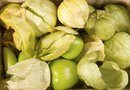 Can You Plant Tomatillos Next to Tomatoes in a Garden?