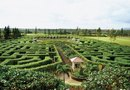 How to Grow a Tree Maze