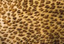 Bedroom Decorating Ideas Using Cheetah