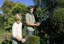 How Far Apart To Plant Red Tip Plants & How to Care for the Shrub