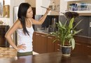 Importance of Plant Housekeeping