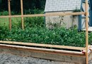 The Best Wood for Raised Plant Beds