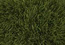 What Types of Fertilizer to Use for Grass