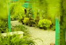 How to Grow Ferns in a Greenhouse