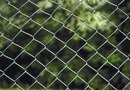 How to Plant Arborvitae Next to a Chain Link Fence
