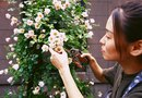How to Make a Rose Trellis out of Branches