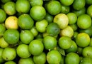 How Often Do Lime Trees Bear Fruit?