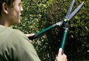 How to Prune Overgrown Evergreen Hedges
