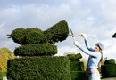 How to Make Animal Topiaries