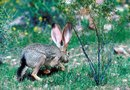What to Use to Keep Rabbits From Eating Your Cherry Trees