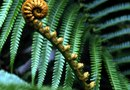 What Do Ferns Require to Grow & Germinate?