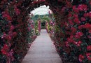 How to Build a Rose Pergola