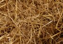 Why Put Straw on Grass Seed