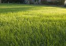 Recipe for Green Grass on the Lawn