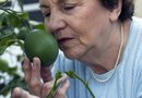 How to Treat Citrus Trees with Chewed Leaves