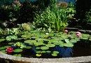 How to Build a Large Garden Pond With Concrete