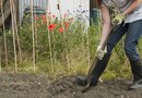 How to Get Rid of Weeds and Rocks in Your Yard