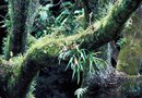 How to Take Care of Elkhorn Ferns