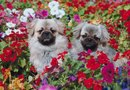 Tips to Keep Dogs Out of Flower Beds