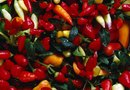 How to Germinate Ornamental Peppers