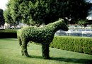 How to Cover an Animal Topiary With Moss
