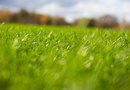 Is It Better to Bag Grass Clippings or Leave Them on the Grass?