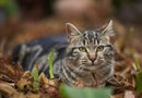 Is Cat Feces Dangerous in a Vegetable Garden?
