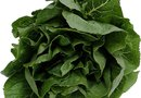 How to Grow Spinach in a Tray