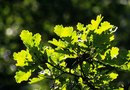 How to Plant a Flower Garden Under an Oak Tree