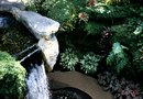 What Plants to Plant on an Outdoor Rock Waterfall