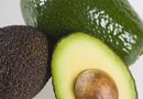 Holes in Avocados and Avocado Tree Pests
