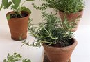 How to Make a Small Irrigation System for Potted Plants