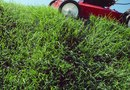 Can You Use Weed-B-Gon Crabgrass Killer on Bermuda Grass?