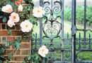 Landscaping in Front of a Wrought Iron Fence