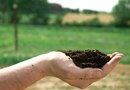 Difference Between Potting Soil & Top Soil