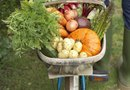 Steps to Take Care of a Vegetable Garden